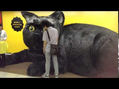 巨大クロネコの鼻を押したなら…。