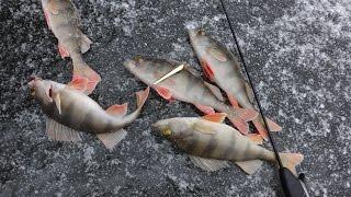 Зимняя рыбалка. Ловля окуня. Вертикальное блеснение со льда
