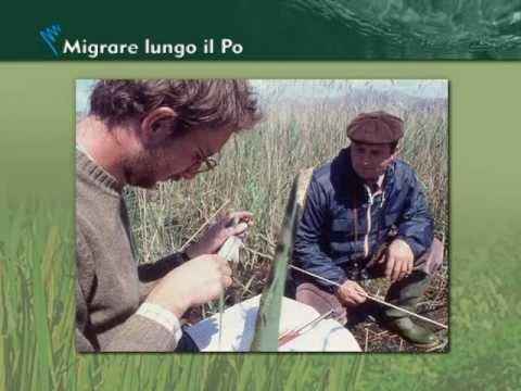 migrare-lungo-il-po