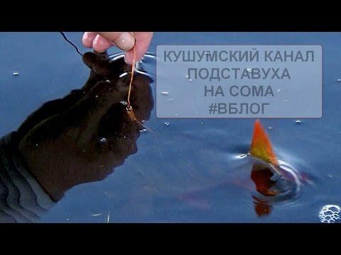 рыбалка на или в казахстане видео сом