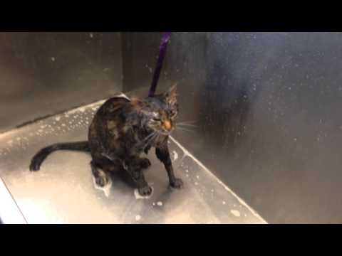 "cat says ""no more"" during her bath!"