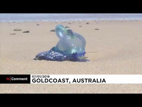 Αυστριαλία: Νεκρά χιλιάδες ψάρια λόγω του καιρού