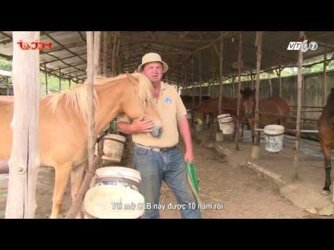 Kỳ 1 : Giới thiệu về loại ngựa tại Việt Nam - Thú cưng TV