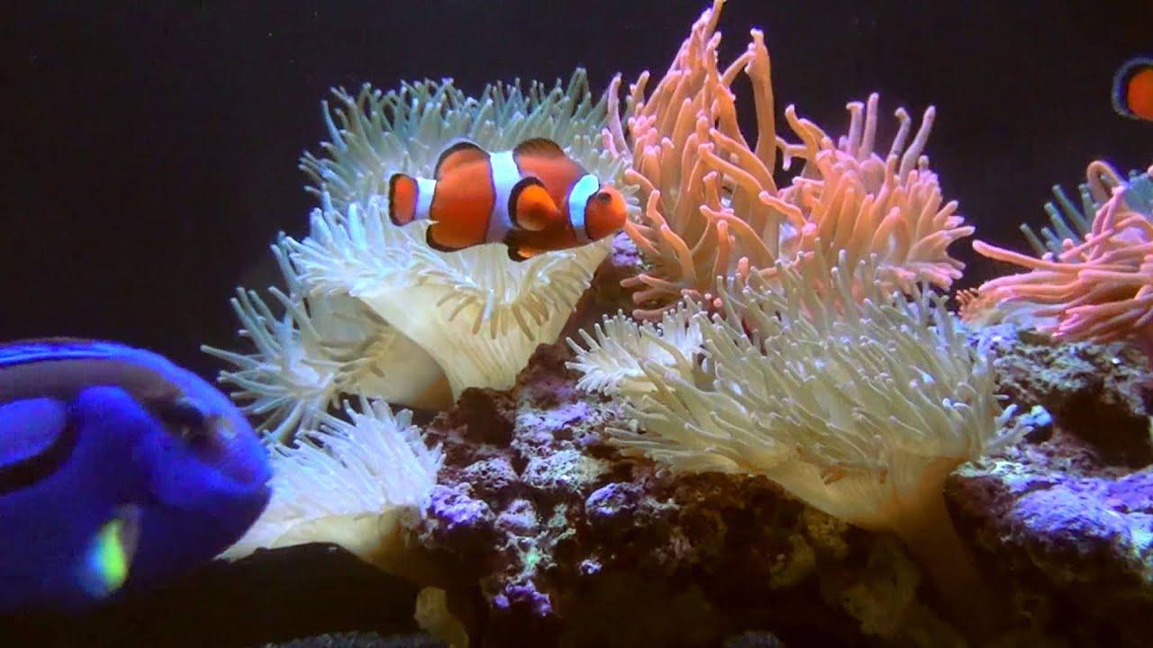 Sea Life London Aquarium Reviews Family Deals