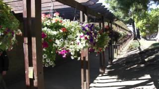 #431 Gartenshow Bloom (Irland, 2011) - Hanging baskets (Petunien, Pelargonien)
