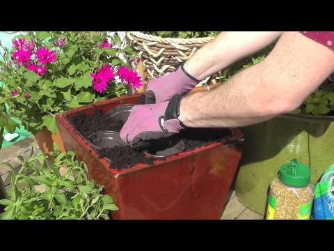 Planting summer containers [video]