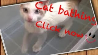 Galera increvase no meu canal sempre novidadesMuito obrigado por se increver I love cat Thank you for subscribe