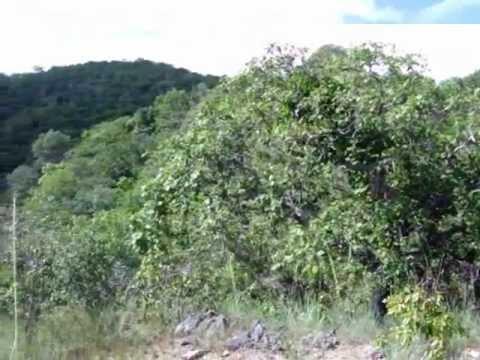 1ª Missão Serra da Bucaina - INCÊNDIO FLORESTAL - GRUPO RAIZ DA TERRA