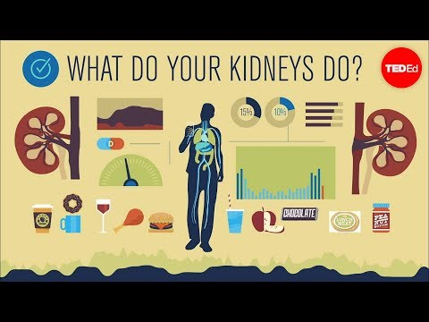 How do your kidneys work