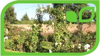 #971 Der Victorian Garden bei David Austin