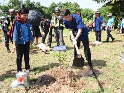 ชาว มมส ร่วมใจปลูกต้นไม้ในวันต้นไม้ประจำปีของชาติ 2560
