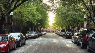 Flowers falling slowly from trees on a Boston street