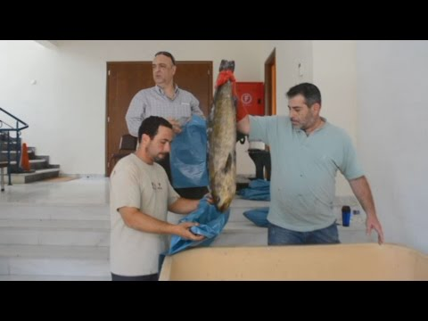 Διανομή ψαριών από  το Εργατικό Κέντρο Ναυπλίου