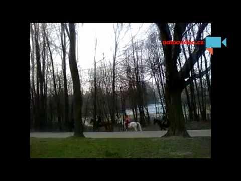 Výlet koní přes lesopark v Těšíně.