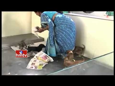 Blue Cross Of Hyderabad Remains Silent Over Dogs Attack In State | HMTV News