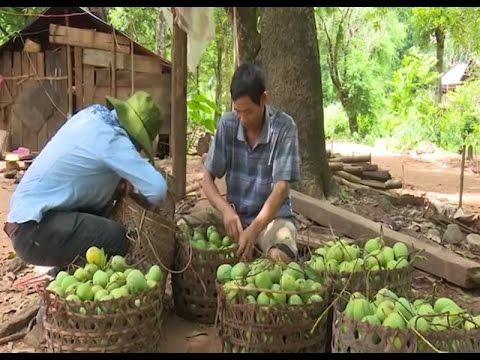 Sơn La đẩy mạnh xúc tiến thương mại, nghiên cứu thị trường tiêu thụ nông sản