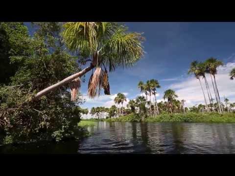 Buritizal Grande do Alto Guaporé em Vila Bela da Santíssima Trindade no Mato Grosso