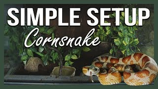 SIMPLE SETUP: CORNSNAKE by Jossers Jungle