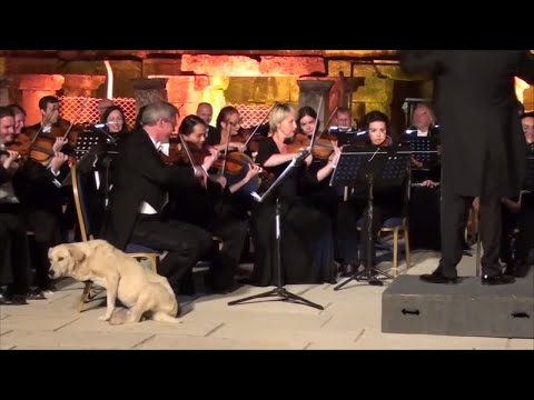 dog crashes outdoor performance at the Grand Theater of Ephesus in Turkey.