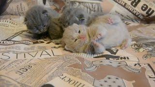 Первый взгляд котенка на мир