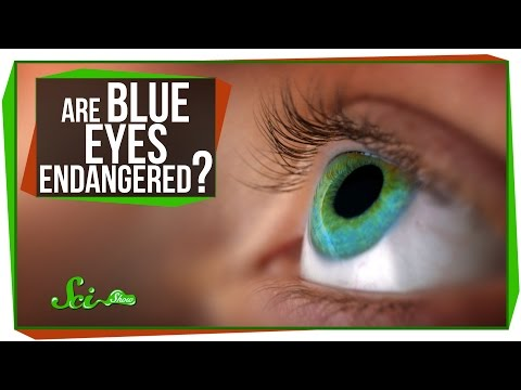 Blue - SciShow explains the genetics -- and physics -- behind why blue eyes are blue, and what the future may be for the trait. Spoiler alert: Blue eyes aren't real...