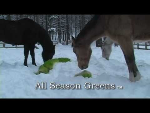 All Season Greens – Winter Greens