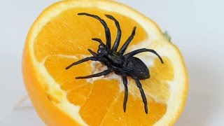 Video SPIDER IN ORANGE! MP3, 3GP, MP4, WEBM, AVI, FLV Mei 2018