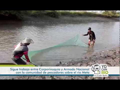 Rescate de alevinos entre Corporinoquia y Armada Nacional en el río Meta