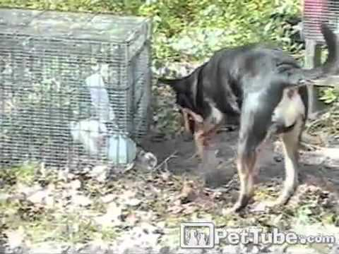 pettube - When the Easter bunny gets trapped, this dog saves the day! http://pettube.com.