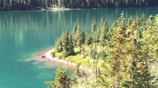 Video Spectacular Grizzly Bears on Climate Hike August 2016 in Glacier National Park MP3, 3GP, MP4, WEBM, AVI, FLV Juni 2017
