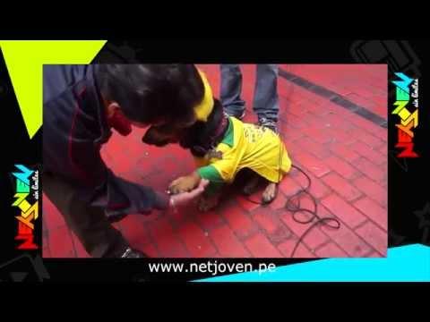Mundial Brasil 2014: El perro mundialista
