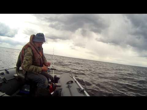 последние новости о рыбалке на ладоге