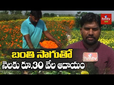 Young Farmer Earning Good Profits In Marigold Cultivation | Hmtv Agri