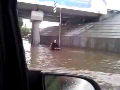 Cão ajuda cadeirante na Inundação.