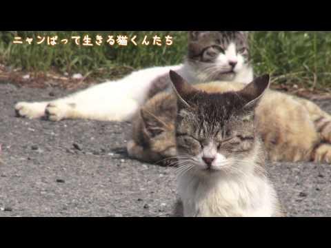 【動画フェス】ニャンばって生きる猫くんたち ちょっと寂しいけど、とても嬉しい別れ編