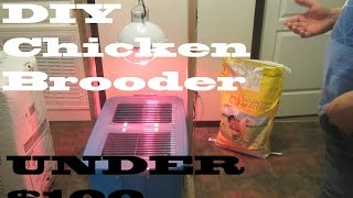 WE ARE GETTING CHICKENS!!!Our DIY chicken brooder, feeder and waterer all for under $100 Canadian!