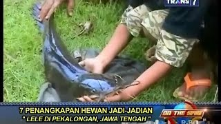 Video On The Spot - 7 Penangkapan Hewan Jadi-Jadian MP3, 3GP, MP4, WEBM, AVI, FLV Juni 2018