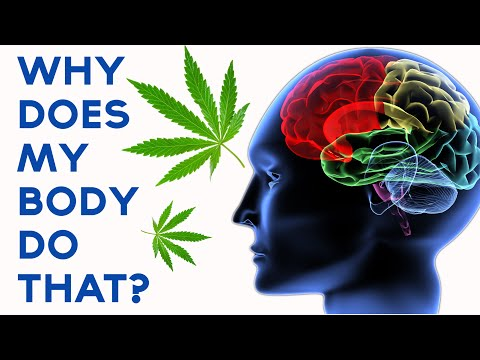 What does marijuana do to your body and mind saintandrewstwinflame sciox Image collections