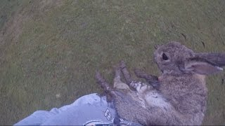 The Morning I Saved a Wild Rabbit