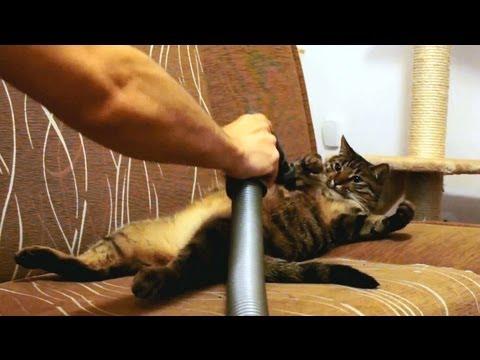 Katt som tycker om att bli dammsugen