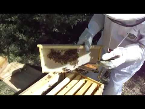 Beekeeping For Beginners Project: Checking The Bee Hives – MOTHER EARTH NEWS