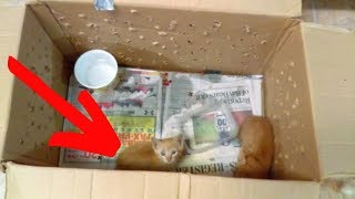 Mother Cat Abandoned Outside A Shelter With Her Kittens Isn't The Creature She Appears To Be by Did You Know Animals?
