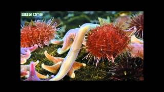 The Hearse Song ~ Underwater Time Lapse of Swarming Monster Worms and Sea Stars