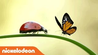 Miraculous Ladybug | In Real Life | Nick