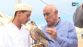 تربية الطير الحر... ولع استهوى قبيلة القواسم وتوارثه الأجيال