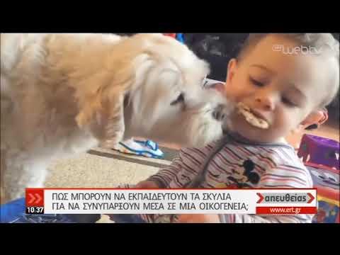 Ποιες συμπεριφορές των σκύλων πρέπει να προσέχουμε | 13/09/2019 | ΕΡΤ