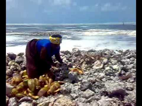 Zanzibar: Coconut fibre trade flourishes