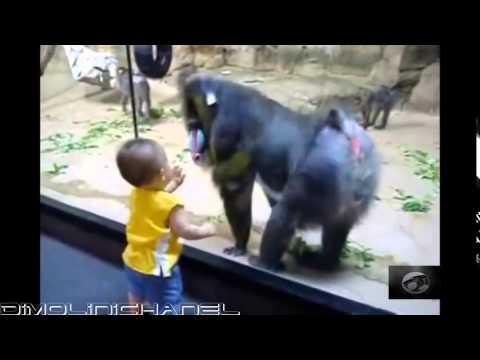 Những pha hài hước khó đỡ 8 / 2013 - Funny clip