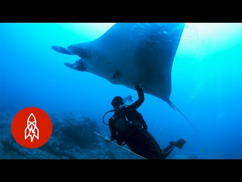 Swim With Manta Rays the Ocean  s Peaceful