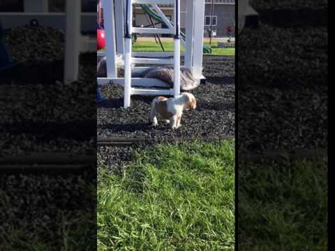 A cute video of Tesla at the park